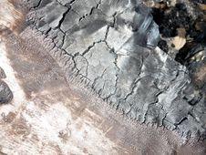Free Burnt Tree Bark 7 Royalty Free Stock Photo - 5639625