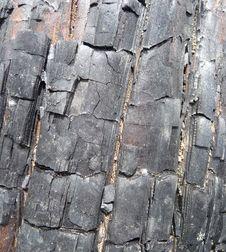 Free Burnt Tree Bark 8 Stock Image - 5639641