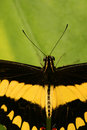 Free Tropical Butterfly With Antennae Royalty Free Stock Photo - 5643675