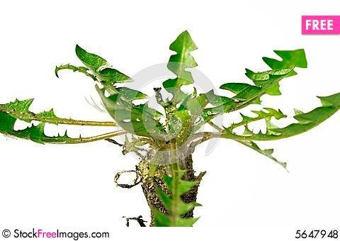 Free Plant Royalty Free Stock Photos - 5647948