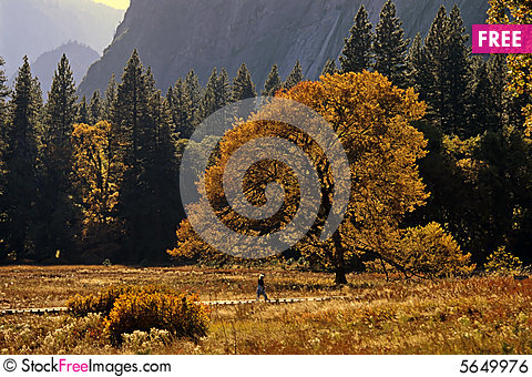 Free Oak Tree In Fall Color Royalty Free Stock Image - 5649976