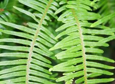 Free The Leaves Of Fern Stock Images - 5640484