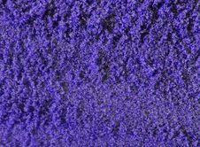Free Purple Sand Background Stock Photography - 5640792