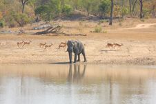 Free Elephant In Sabi Sands Royalty Free Stock Photo - 5640795