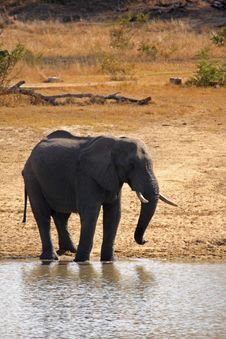 Free Elephant In Sabi Sands Royalty Free Stock Image - 5640816