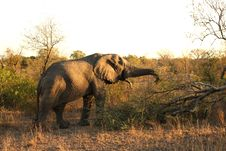 Free Elephant In Sabi Sands Royalty Free Stock Images - 5640999