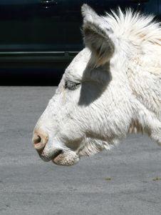 Free Llama S Head -  Vertical Royalty Free Stock Photos - 5641178