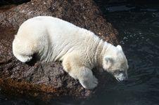 Free White Bear Cub Stock Images - 5641234