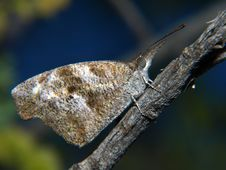 Free Butterfly Perched On Tree Branch - Horizontal Royalty Free Stock Image - 5641376
