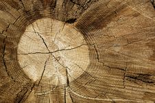 Free Wood 01 Royalty Free Stock Photos - 5641528
