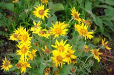 Free Wild Flowers Stock Image - 5641561