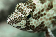 Grouper S Face Royalty Free Stock Images