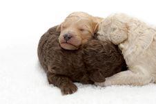 Free Pups Stock Image - 5642331