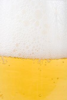 Free Fresh Foamy Beer Stock Photos - 5642633