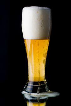 Free Fresh Foamy Beer Stock Photo - 5643270
