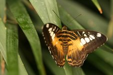 Free Tropical Butterfly Royalty Free Stock Images - 5643579
