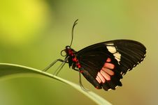 Free Tropical Butterfly Stock Image - 5643591
