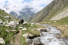 Free Hiking Royalty Free Stock Photo - 5644405