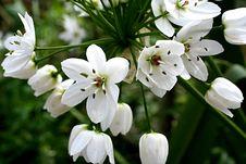 Free White Flower Stock Photo - 5645060
