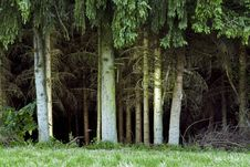Free Forest Trees Stock Photography - 5645832