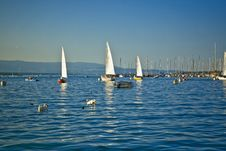 Free Yachts On Sea Stock Photography - 5645952