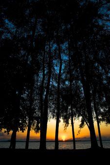 Free Sunrise Through The Trees Stock Image - 5646721