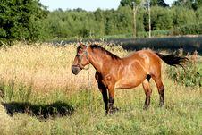 Free Big Horse Stock Photos - 5646873