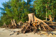 Free Tree Stumps On Beach Stock Photo - 5646950