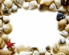 Seashell Frame On White Stock Images