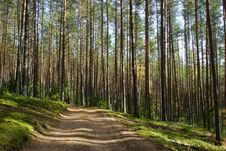 Free Forest Road Royalty Free Stock Photography - 5646987