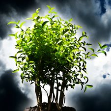 Free Green Plant With Dark Sky Background Royalty Free Stock Photography - 5647337