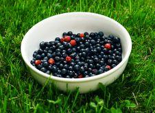 Free Bilberries Stock Photos - 5647443