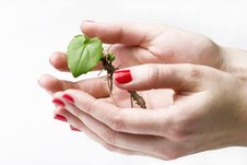 New Life In Hands Royalty Free Stock Photos