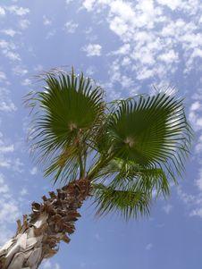 Free Palm Tree Stock Photography - 5648032