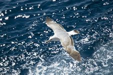 Free Seagull Stock Images - 5648124