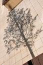 Free Tree Shadow Stock Photo - 5654560