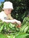 Free Little Gardener Royalty Free Stock Photos - 5656178