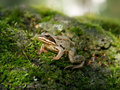 Free Forest Frog Stock Photo - 5658700