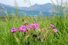 Free Wild Flowers Stock Photography - 5650242