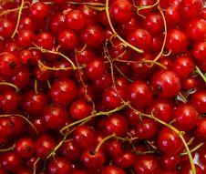 Free Redcurrant Stock Image - 5651181