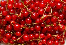 Free Redcurrant Royalty Free Stock Images - 5651199
