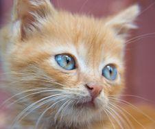 Free Red Kitten Royalty Free Stock Photos - 5651768