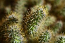 Free Cactus Stock Photo - 5652240