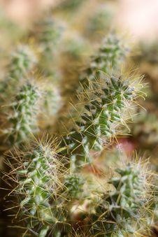 Free Cactus Stock Photo - 5652270