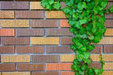 Free Brick Wall Royalty Free Stock Photography - 5652417