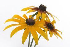 Free Flowers Stock Photo - 5652530