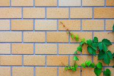Free Brick Wall Stock Photography - 5652532