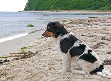 Free Dog At Beach 2 Stock Photo - 5652750