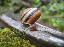 Free Snail 10 Royalty Free Stock Photos - 5652778
