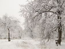 Free Trees In A Snow Stock Photography - 5653442